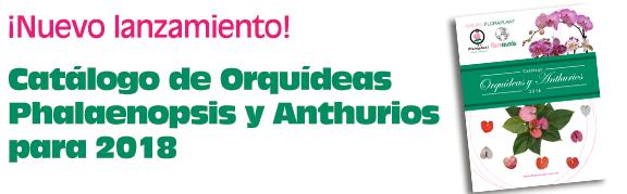 data/banner-orquidea18.png