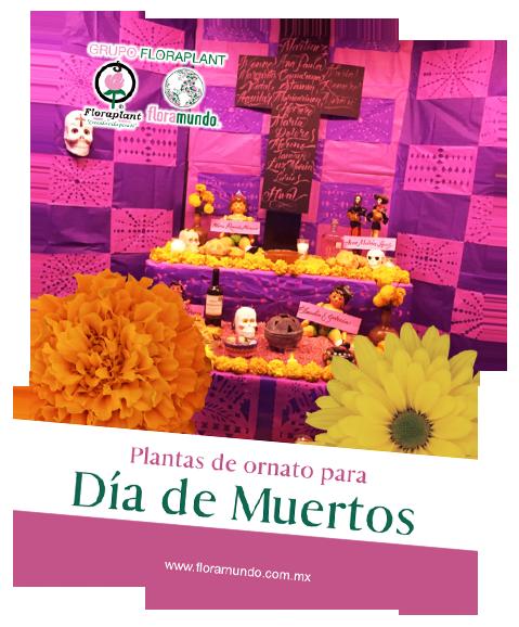 data/slides20/catalogo-dia-de-muertos-floramundo.png